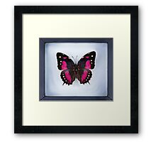 Butterfly in Frame (Digital Art) Framed Print