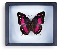Butterfly in Frame (Digital Art) Canvas Print