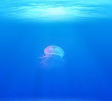 Beautiful Iridescent Jellyfish in a Sea of Blue by pdgraphics