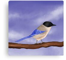 Happy Azure-Winged Magpie on a Blue Sky Canvas Print