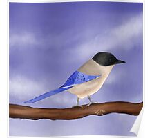 Happy Azure-Winged Magpie on a Blue Sky Poster