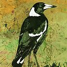 Mr Magpie by Karyn Fendley