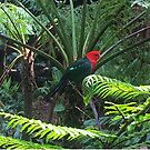 Rainforest Parrot by KazM