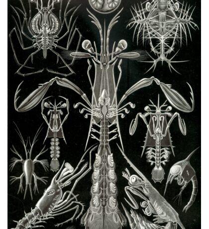 Haeckel Thoracostraca Sticker