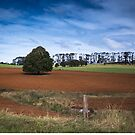 Really Red Soil Dorrigo by Clare Colins