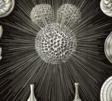 Haeckel Thalamphora Sticker