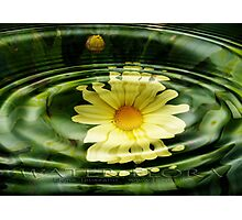 water flora Photographic Print