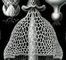 Haeckel Basimycetes Sticker