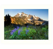 Lupines and Mount Shuksan Art Print