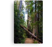 Fallen Tree in near Mount Rainier Canvas Print