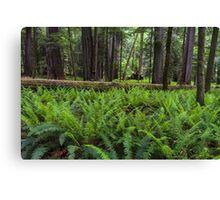 Sword Ferns in Macmillan Provincial Park Canvas Print