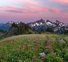 Mazama Ridge Wildflowers by Michael Russell