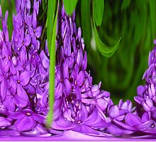 lilacs by candis