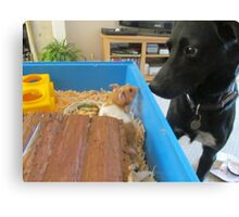 Hamster and dog  Canvas Print