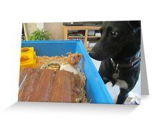Hamster and dog  Greeting Card