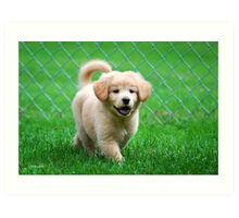 Golden Retriever Puppy Art Print