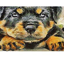Impressinist Rottweiler Puppy Portrait in Vincent van Gogh Style Photographic Print