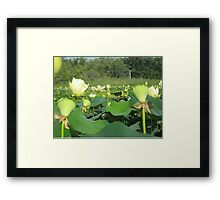 Lotus Patch Framed Print
