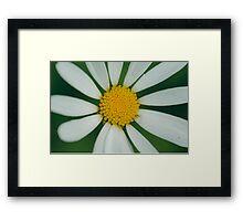 White flower macro Framed Print