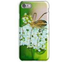 Insect on a white flower macro iPhone Case/Skin