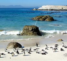 South African Penguins by jccorc