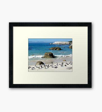 South African Penguins Framed Print