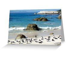 South African Penguins Greeting Card