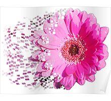 Pink gerbera explosion Poster