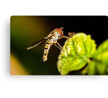 Resting Hover Fly Canvas Print