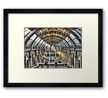 The Natural History Museum London Framed Print