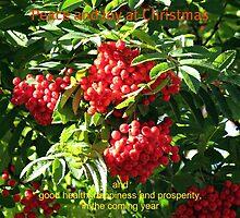 Red Rowan Berries Christmas Card by BlueMoonRose