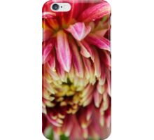 Up Close Dahlia iPhone Case/Skin
