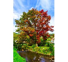 Vivid colors of autumnal nature, red oak on the river, french countryside Photographic Print