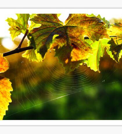 Spider net on grape leaves, vineyards of Alsace Sticker