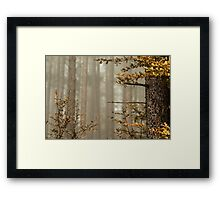 Beautiful pinetrees in the foggy forest, french nature, autumn Framed Print
