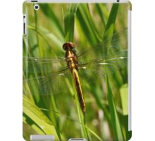 Dragonfly with clear wings iPad Case/Skin