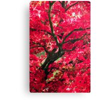 Japanese acer Canvas Print