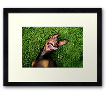 Dolly D and a Moment of Madness Framed Print