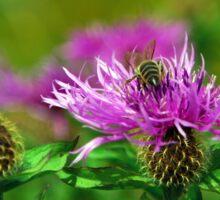 Gathering Wild Nectar Sticker