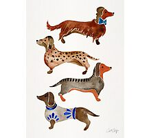 Dachshunds Photographic Print