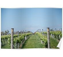 Vineyard rows Poster
