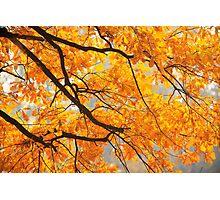 Paint It Orange Photographic Print
