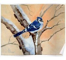 Blue Jay at Sunset Poster