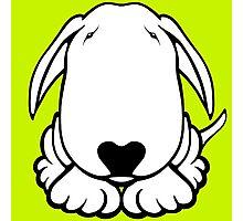 Dobby Ears Bull Terrier  Photographic Print