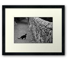 Cat in Scotland  Framed Print