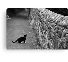 Cat in Scotland  Canvas Print