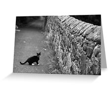 Cat in Scotland  Greeting Card