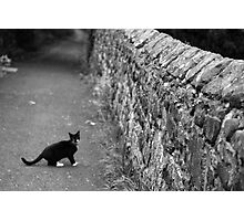 Cat in Scotland  Photographic Print
