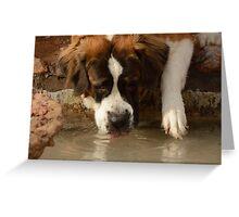 Saint Bernard Drinking Water Greeting Card