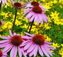 Colorful echinacea flowers Sticker